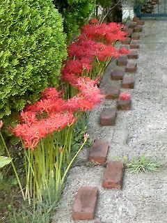 路傍に咲きし
