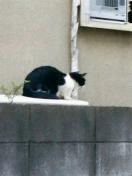 猫は炬燵で