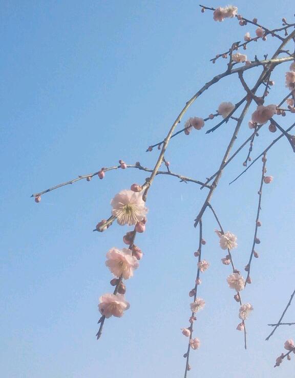 いつの間にか春