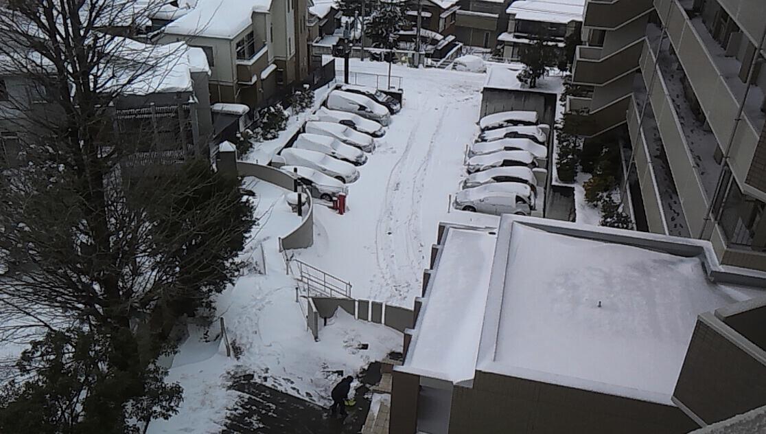 今朝は雪かき