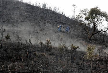 山火事の原因