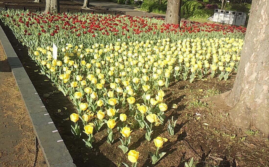 春の日比谷公園