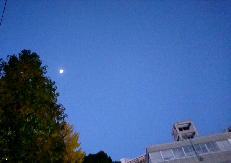 朝の居待月