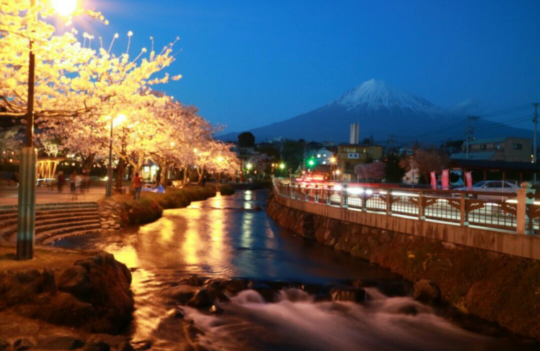 お浅間さんの桜