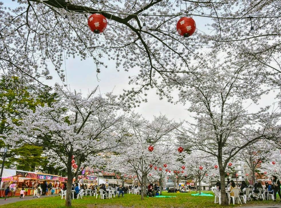 仙台でも桜満開