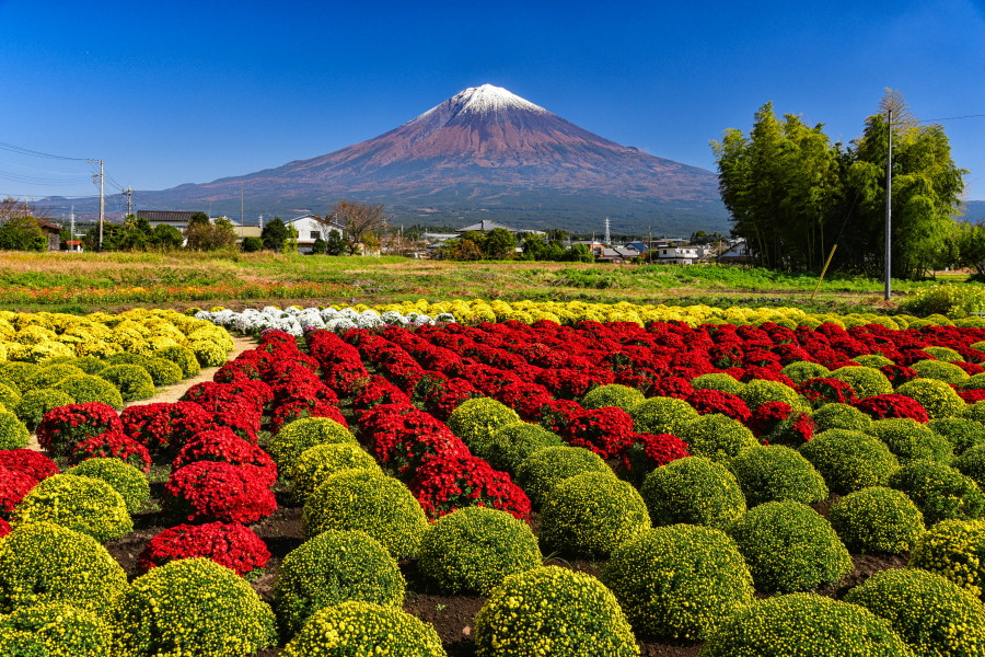 富士山麓は